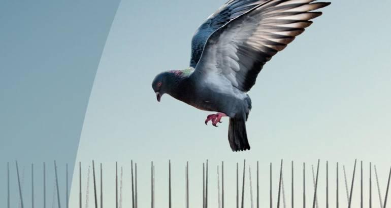 Απώθηση Πτηνών